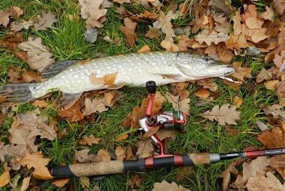 Щучья погода: а не пора ли рыбалку?