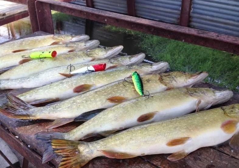 Комфортная рыбалка на реке Ахтуба