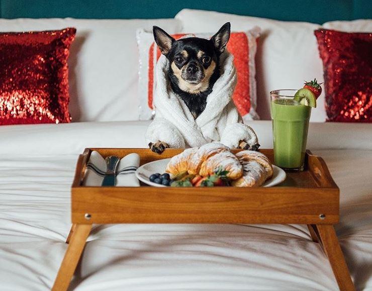 Отель для собак - как выглядит уход за нашим питомцем?