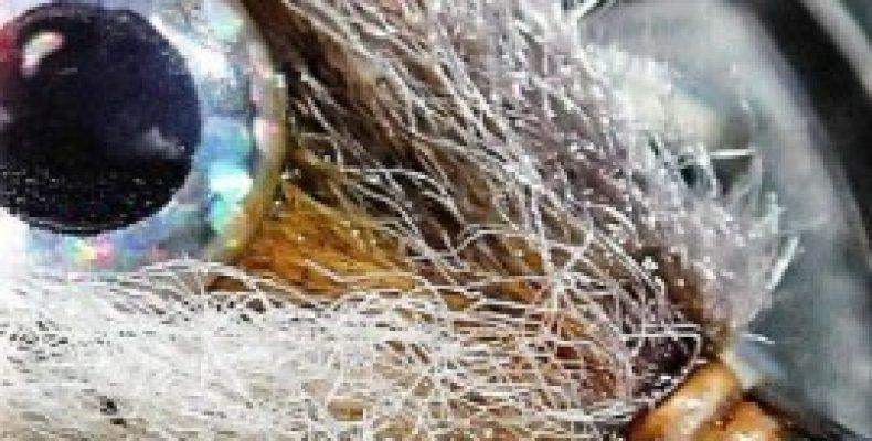 3D-глазки для стримеров