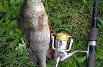 Особенности летней рыбалки на окуня
