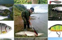 Как ловить хищную рыбу