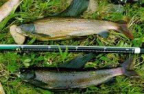 Рыбалка на Енисее