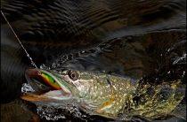 Рыбалка на нижней Волге весной