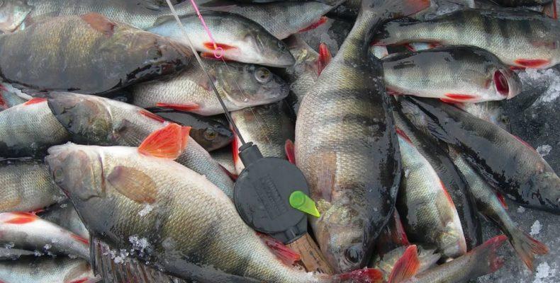 Зимняя рыбалка в Карелии