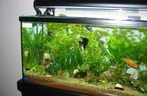 Оптимальный аквариум для городской квартиры