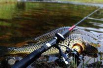 Донная рыбалка