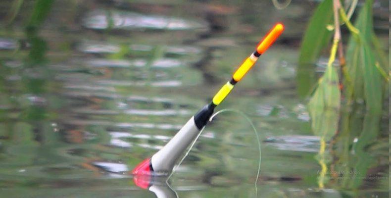 Дождевой червь, лучший друг рыболова