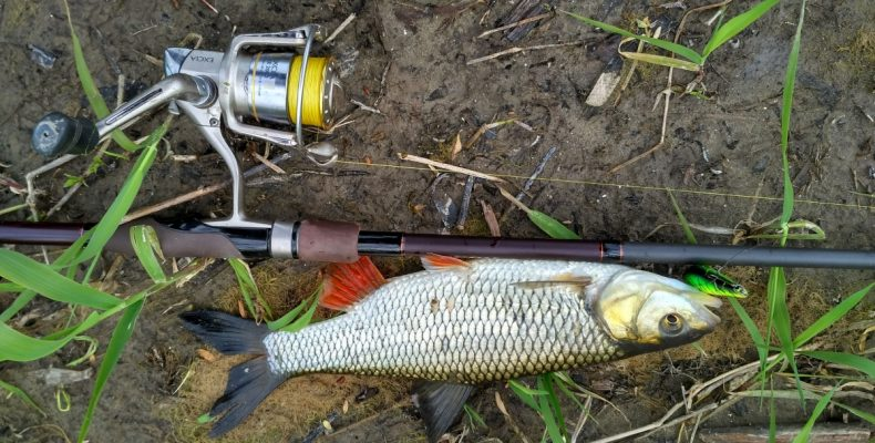 Особенности ловли голавля