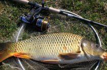 Карповая рыбалка — что вам нужно? Советы рыболовам на карпа
