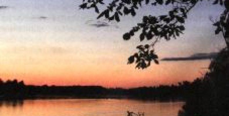 Рыбопропускные сооружения и забота о берегах