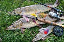 Ловля щуки на спиннинг: выбор снастей, приманок и техника ловли