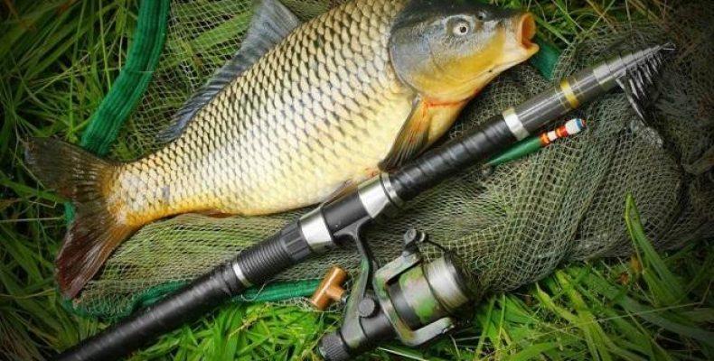 Способ ловли рыбы