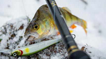 Зимняя спиннинговая ловля в холодных водоемах